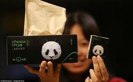 Khăn giấy hạng sang làm từ phân gấu trúc: Liệu bạn có muốn dùng?