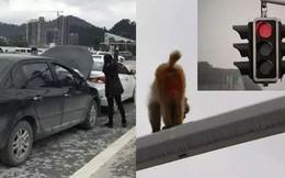 Nhìn nhầm mông khỉ thành đèn đỏ, người phụ nữ gây ra vụ tai nạn hi hữu