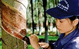 Không bán cổ phần Tập đoàn Cao su Việt Nam cho nhà đầu tư nước ngoài vì sao?