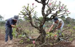 Thu tiền triệu từ dịch vụ chăm sóc cây cảnh hậu Tết