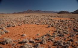 Giải mã bí ẩn những vòng tròn kỳ lạ trên sa mạc ở châu Phi