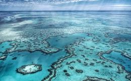 Phát hiện thủ phạm có thể giết chết rạn san hô lớn nhất thế giới