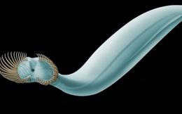 """Phát hiện trùng cổ không mặt, 50 """"tay"""" từng thống trị Trái Đất 541 triệu năm trước"""