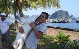 """Tại sao Vịnh Hạ Long là điểm đến an toàn, dù vừa xuất hiện ảnh """"người ôm cá mập""""?"""