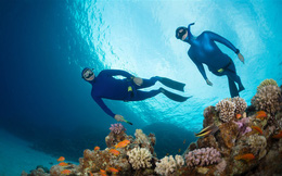 Nóng lên toàn cầu đang giết chết sự sống của hệ thống san hô lớn nhất thế giới