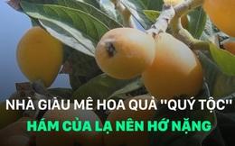 """Mê hoa quả """"quý tộc"""", hám của lạ, nhà giàu Việt hớ nặng"""