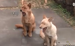 Câu chuyện về tình bạn của 2 chú chó hoang khiến bao người xúc động