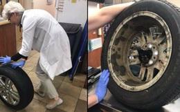 Hi hữu: Mèo con được đưa đi cấp cứu vì chui đầu vào bánh xe