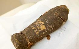 Sai lầm đáng sợ của khoa học: Xác ướp 2300 tuổi ở Ai Cập bị nhầm là... chim ưng cổ đại
