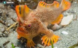 Cá có chân vẫn chưa lạ, người ta mới phát hiện thêm loài cá có tay hiếm nhất hành tinh