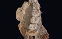 Hóa thạch phát hiện ở Israel có thể sẽ viết lại lịch sử nhân loại