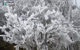 Miền Bắc rét đậm, Mẫu Sơn xuất hiện băng tuyết, nhiệt độ chạm ngưỡng -1,6 độ C