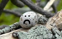 Loài chim lười nhất thế giới: Đẻ trứng trên cành cây, rơi vỡ đẻ quả khác