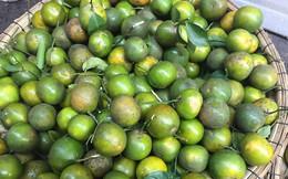 Nhìn giống chanh nhưng ngọt như đường, loại quả giá rẻ này gây 'sốt' thị trường Đà Nẵng