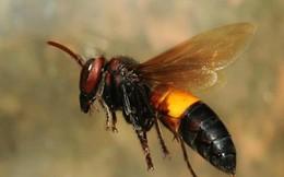 Bị ong vò vẽ đốt 20 nốt, nam thanh niên nhập viện
