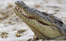 Đang đi câu cá, người phụ nữ bị cá sấu tha đi
