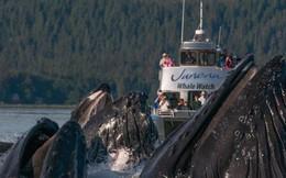 Cả nhà đi thuyền xem cá voi cho biết, cá to quá khiến bà mẹ òa khóc rồi gọi điện báo công an