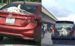 Chú vịt trắng ngóc đầu, nằm phía sau ô tô - hình ảnh hài hước gây chú ý trong ngày chủ nhật