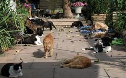 Ghé thăm RAPS - thánh địa của những con mèo bị bỏ rơi lớn nhất Bắc Mỹ