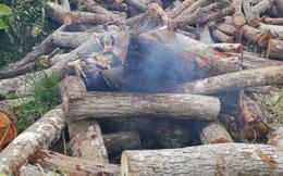 Ngang nhiên tưới xăng đốt gỗ tang vật khiến một cán bộ kiểm lâm bị cháy xém tóc, bỏng tay