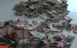 Bán rau 10 năm tích được 100 triệu, lão nông khóc ròng vì tiền bị chuột 'xơi tái'