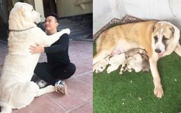 """Chó bố nặng gần 90 kg và đàn chó con hiếm gây """"sốt"""" mạng xã hội Việt"""