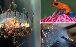 """Đây là các loài động vật """"sành điệu"""" còn hơn cả fashionista loài người"""