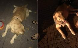 Câu chuyện về chú chó dũng cảm, tông cửa, cào tường để cứu mọi người trong đám cháy