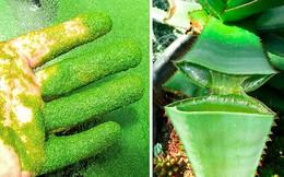 Nhìn thì ngon nhưng chớ dại ăn phải 5 loài cây này, tất cả đều là kịch độc