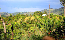 Thanh tra toàn diện các Ban quản lý rừng phòng hộ tại Gia Lai
