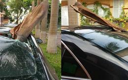 Đỗ xe dưới gốc cây dừa, ô tô gặp phải tai họa ít ai ngờ đến!