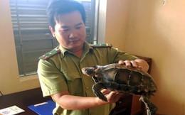 Kon Tum: Phát hiện 1 cá thể rùa quý hiếm bò ngay trên đường