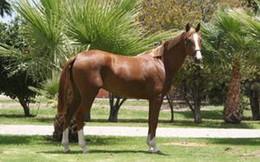 Những giống vật quý hiếm nhất thế giới: Một con ngựa cũng có giá 100.000 đô