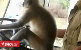 Clip: Khỉ lái xe buýt khiến hành khách kinh hãi
