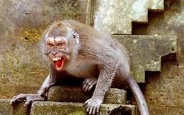 """Thanh Hoá: Khỉ nuôi lên """"cơn điên"""" cắn nát tay hàng xóm"""