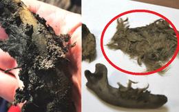 Phát hiện xác chó 2.000 năm vẫn còn nguyên lông, sọ người bị phân thây bí ẩn