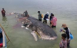 Xác cá voi chứa 6kg rác thải nhựa trôi dạt vào vùng biển Indonesia
