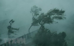 Tin bão khẩn cơn bão số 9: Bão giật cấp 12, cách Nha Trang khoảng 290km, cách Phan Thiết khoảng 340km