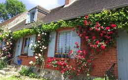 Ngắm những ngôi nhà thơ mộng với giàn hoa đẹp như cổ tích ở làng quê nước Pháp