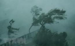 Bão số 9 đang giật cấp 12, chiều nay Sài Gòn có mưa rất to, dự kiến sơ tán nửa triệu người