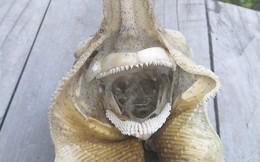 Phát hiện loài sinh vật 'ngoài hành tinh' tại bờ biển New Zealand