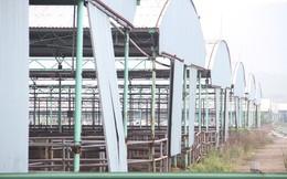 Cảnh tan hoang tại siêu dự án nuôi bò ở Hà Tĩnh được BIDV cho vay nghìn tỷ