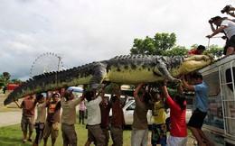 Những 'kẻ khổng lồ' trong thế giới động vật