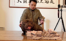 Chú chó 2,6 tỷ của đại gia Biên Hòa là loại chó cơ bắp, có màu nâu đỏ đẹp nhất Trung Quốc