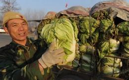 Xu hướng bỏ thành thị về mưu sinh tại nông thôn Trung Quốc