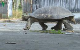 Thả con càng đước nặng hơn 11 kg về Khu bảo tồn thiên nhiên