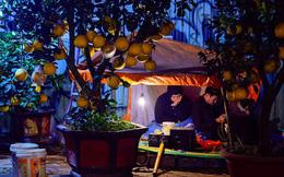 Ảnh: Tê cóng trong đêm Hà Nội lạnh dưới 10 độ C trông cây cảnh Tết