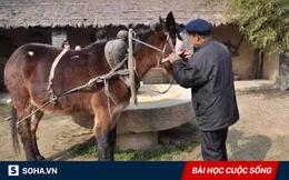 Bị ngựa lải nhải chê bai, lừa đã có một hành động khiến ngựa hối không kịp!