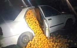 Chặn 3 chiếc xe khả nghi lại để kiểm tra, cảnh sát phát hiện một thứ không ngờ tới bên trong