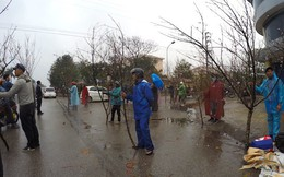 Dòng người đứng đường dầm mưa bán đào ngày cận Tết